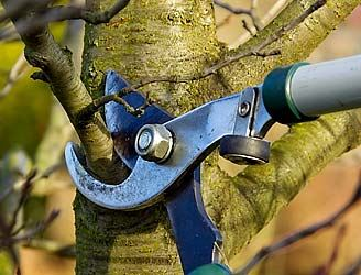 Pruning shears cutting branch on tree